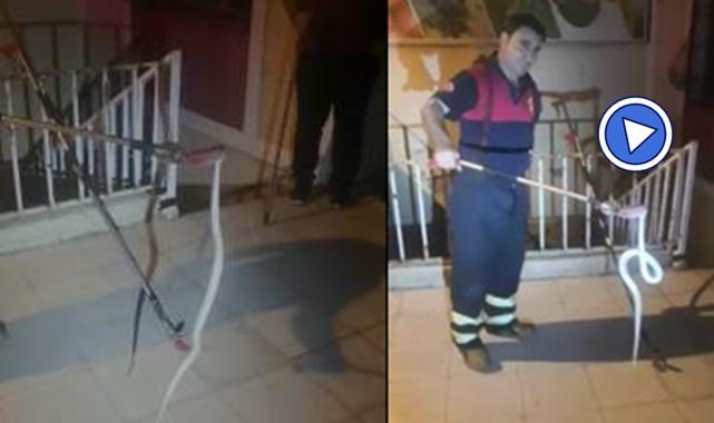 Şanlıurfa'da avukatlık bürosuna yılan girdi